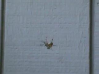 Как напугать паука